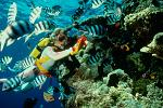 scubadiving at the Great Barrier Reef