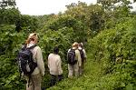 trekking the vulcano slopes, Parque National des Virunga