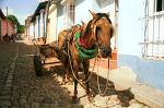 a horse and cart, colonial houses, Trinidad