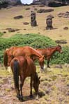 horses grazing near the Moai statues
