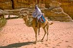 Bedouin man with his camel, Sinai Desert