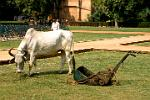 Indian lawn mower