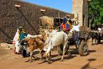local transport by ox cart