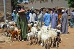 Peul or Fulani, herds people at the market