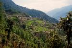 Pictures of Nepal - Langtang Trek - terraced fields of Bharku, a few hours from Dhunche, the starting point