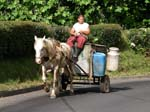 local transport by horsecart, Sao Miguel