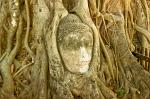 a Buddha's head in tree roots, Wat Phra Mahathat