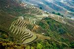 rice terraces, landscape around Sapa
